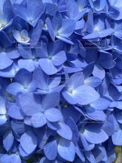 花のクローズアップの写真・画像素材[3337177]