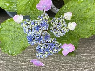 紫色の花のグループの写真・画像素材[3377958]