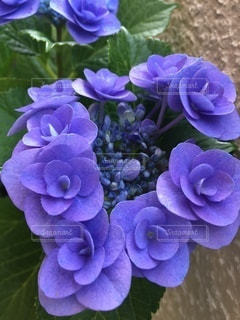 花のクローズアップの写真・画像素材[3377977]