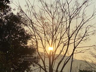 屋外,朝日,樹木,正月,お正月,日の出,新年,初日の出