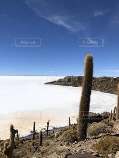 砂浜の上に立つ羊の群れの写真・画像素材[4095830]