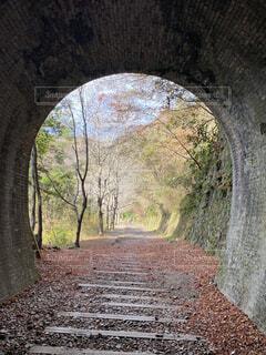 森の中のトンネルの写真・画像素材[4098788]