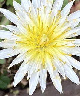 花のクローズアップの写真・画像素材[4312030]