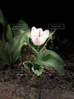 花のクローズアップの写真・画像素材[4312031]