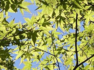 木のクローズアップの写真・画像素材[4411523]