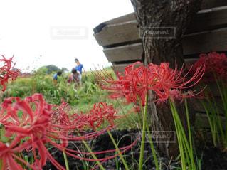 風景,空,屋外,田んぼ,彼岸花,秋の花,秋空,草木,筑波,田舎遊び,生き物探索