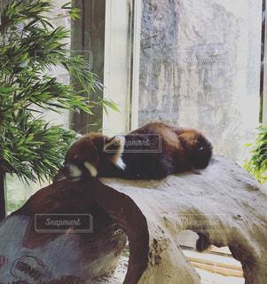 自然,暑い,動物園,ズーラシア,地球温暖化,レザーパンダ