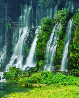 白糸の滝(静岡)の写真・画像素材[1448116]