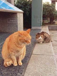 猫,かわいい,ねこ,眠い,ひなたぼっこ,野良,うとうと,野生,江の島,ツーショット,人懐こい