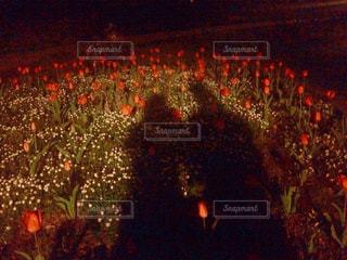 公園,花,夜,カップル,影,チューリップ,シルエット,デート,赤い,ツーショット