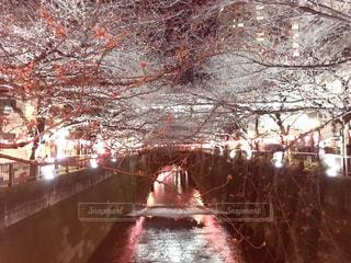 春の写真・画像素材[405386]
