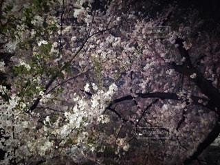 春の写真・画像素材[425145]