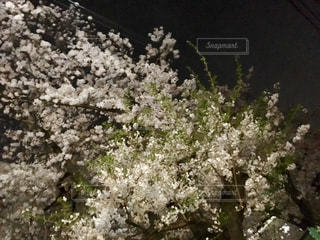 春の写真・画像素材[425146]