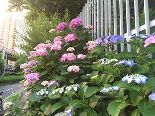 花の写真・画像素材[475657]
