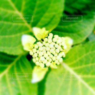 花の写真・画像素材[475659]