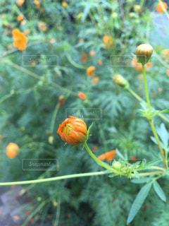 花の写真・画像素材[475701]