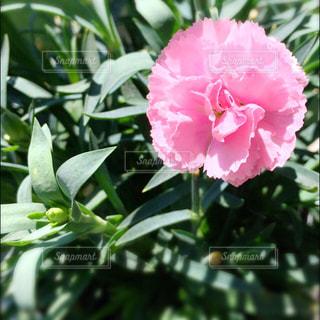 花の写真・画像素材[477691]