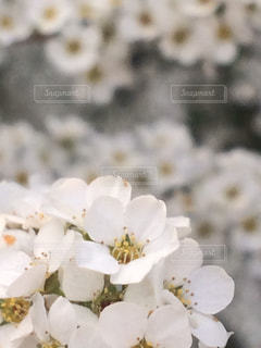 フラワーフォトの写真・画像素材[933553]