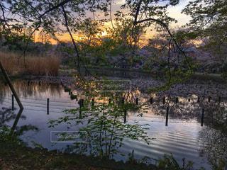 自然,風景,空,公園,夕日,桜,屋外,夕暮れ,水面,池,影,オレンジ,光,樹木,リフレクション,グラデーション,日中,散策