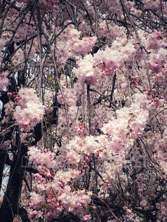 仏の庭の写真・画像素材[1488608]