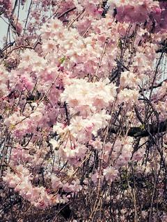 仏の庭の写真・画像素材[1488615]