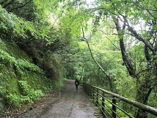 覆い被さるような樹木たちの写真・画像素材[2264567]