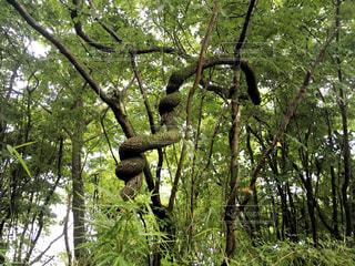 山神様の森の写真・画像素材[2264577]