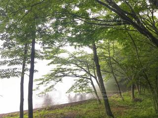 山神様の森の写真・画像素材[2264581]