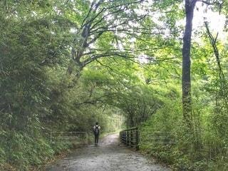緑のトンネルの写真・画像素材[3605682]