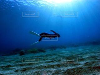 海底で脱力の写真・画像素材[1362218]