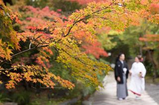 家族,秋,紅葉,京都,着物,夫婦,結婚,未来,夢,白無垢,ポジティブ,目標,将来,可能性,和婚