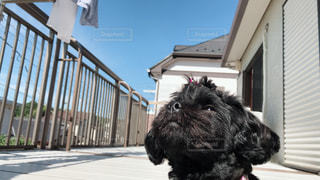 犬,太陽,黒,暑い,眩しい,暑さに負けるな,ペキプー,日射しきもちー