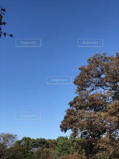 空,屋外,晴天,葛西臨海公園,秋の空,雲ひとつない,蒼天