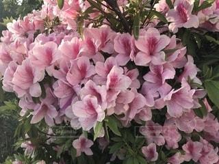 風景,花,ピンク,鮮やか,草木