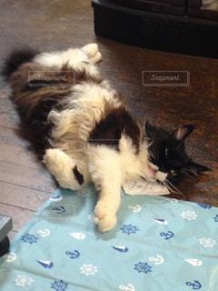 猫,暑い,冷たい,メインクーン,毛が長い,暑すぎる,暑さに負けるな,保冷剤,暑いの嫌い