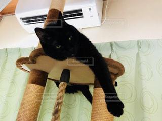 猫,動物,屋内,黒猫,エアコン,猛暑,夏バテ,冷房,熱中症対策,冷風