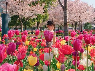 春を満喫の写真・画像素材[1367972]