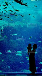 海を想うの写真・画像素材[1357608]