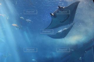 水面下を泳ぐ魚たちの写真・画像素材[1358370]