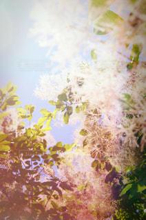 木のクローズアップの写真・画像素材[2278731]