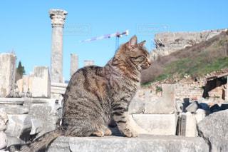 猫,動物,ペット,人物,トルコ,ネコ,エヘェソス遺跡