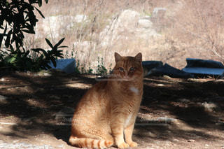 猫,動物,ペット,人物,遺跡,トルコ,ネコ
