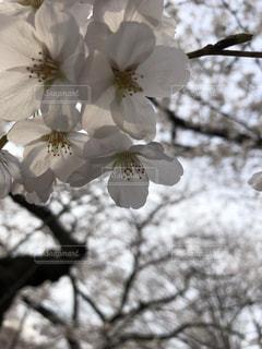 木の枝に花の花瓶の写真・画像素材[1372546]