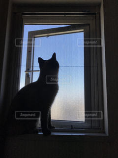 窓の前に座っている猫の写真・画像素材[1379178]