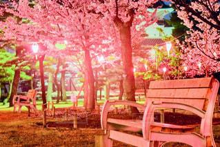 夜桜とベンチの写真・画像素材[1434016]