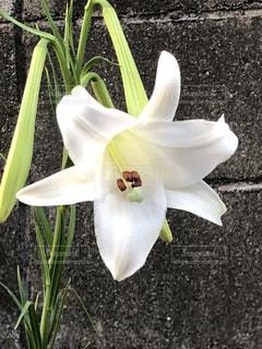 庭に咲いた一輪の花の写真・画像素材[1369720]