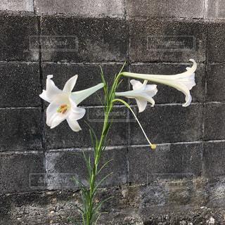 れんが造りの建物の上に花の花瓶の写真・画像素材[1381466]