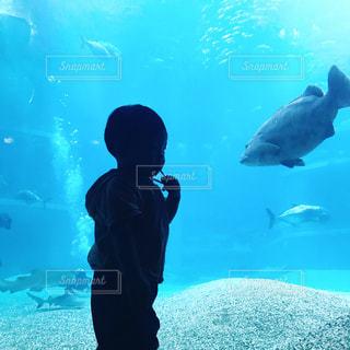 水族館の写真・画像素材[1362253]