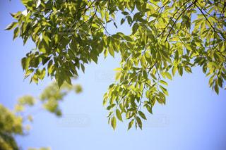 ツリーの横にあるヤシの木のグループの写真・画像素材[1362406]