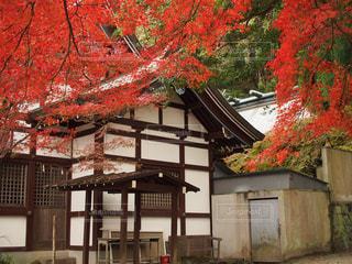 秋,紅葉,もみじ,若山神社